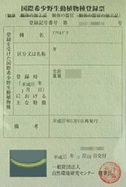 買取品目-象牙登録票